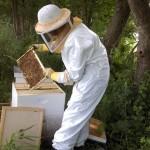 examining frames inside East Hive