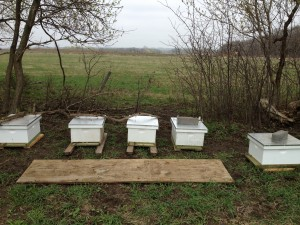 Zweber Farm Hives