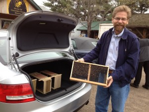 Bees in the trunk