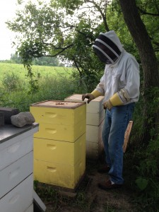 rick with yellow hive